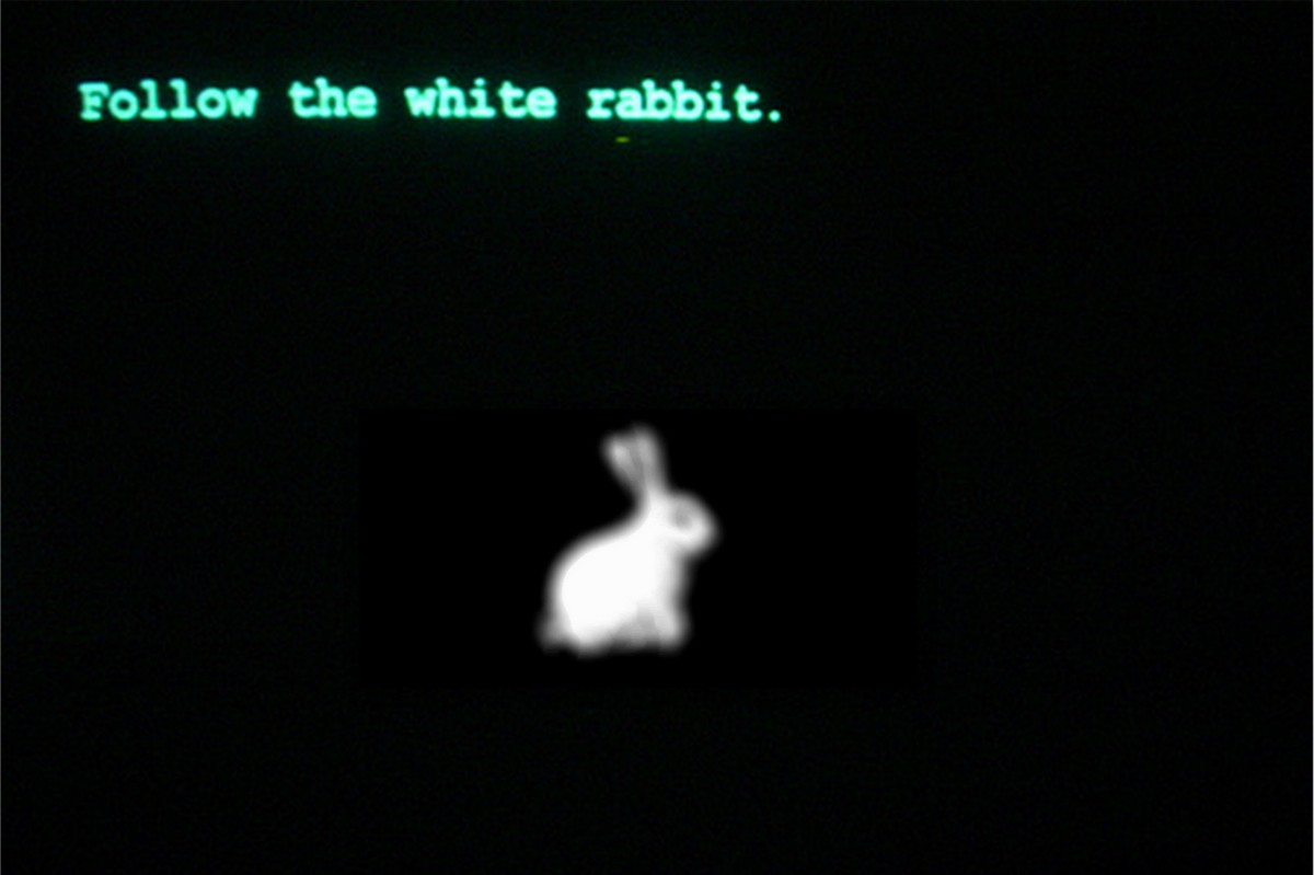 Follow The White Rabbit @ Petit Bain